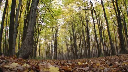 Les forêts jouent un grand rôle dans le cycle du carbone. Les processus d'échange de carbone entre l'atmosphère, la végétation et le sol sont la photosynthèse, la respiration autotrophe et la respiration hétérotrophe. La photosynthèse permet à la végétation d'absorber le CO2 de l'atmosphère.