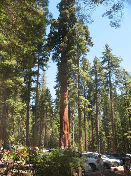sequoia-foret--13-.jpg