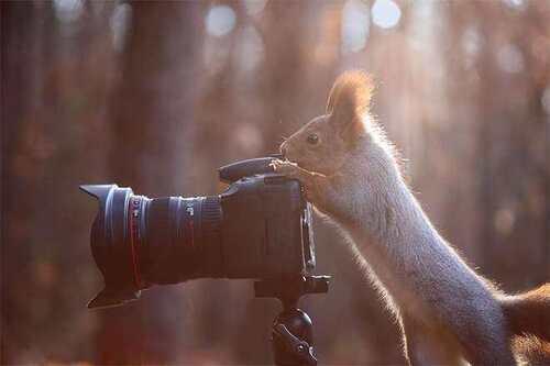 Chez le photographe