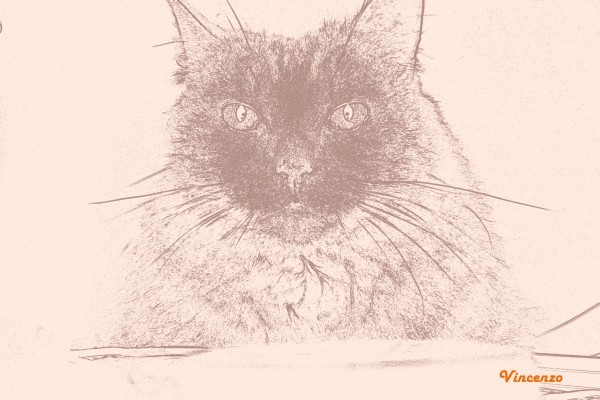 chat automne dessin