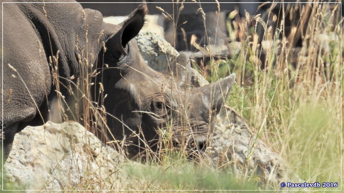 Zoo du Bassin d'Arcachon - Août 2016 - 7/15
