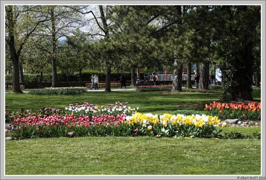 Les tulipes suisses - 1
