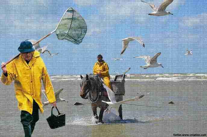 pêche a cheval