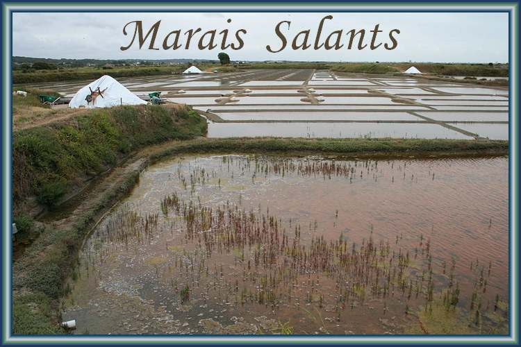Le grand almanach de la France : Les marais salants