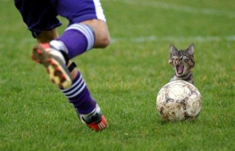 Quelques photos insolites sur les animaux...