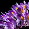 Fleur d'orchidée.jpg