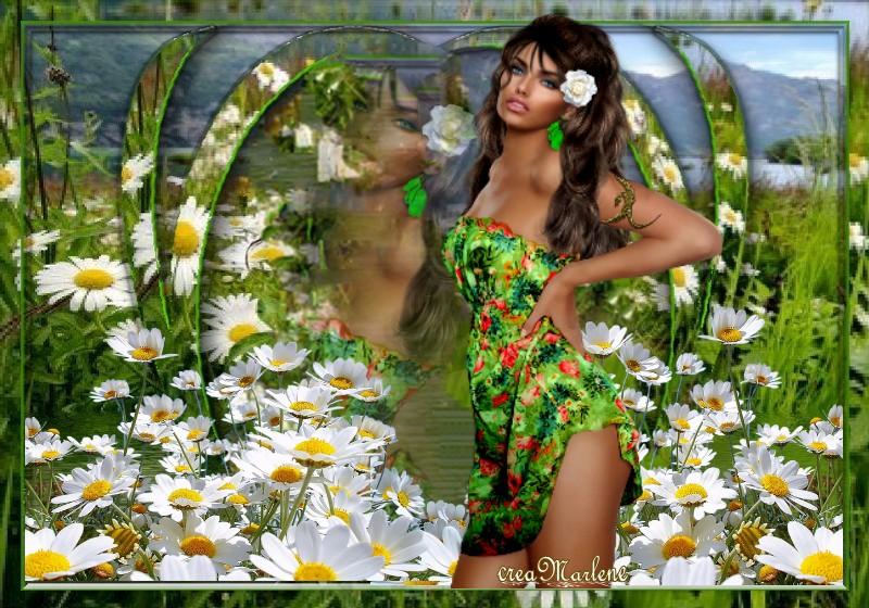 ♥ Dans un champs de Marguerite ♥