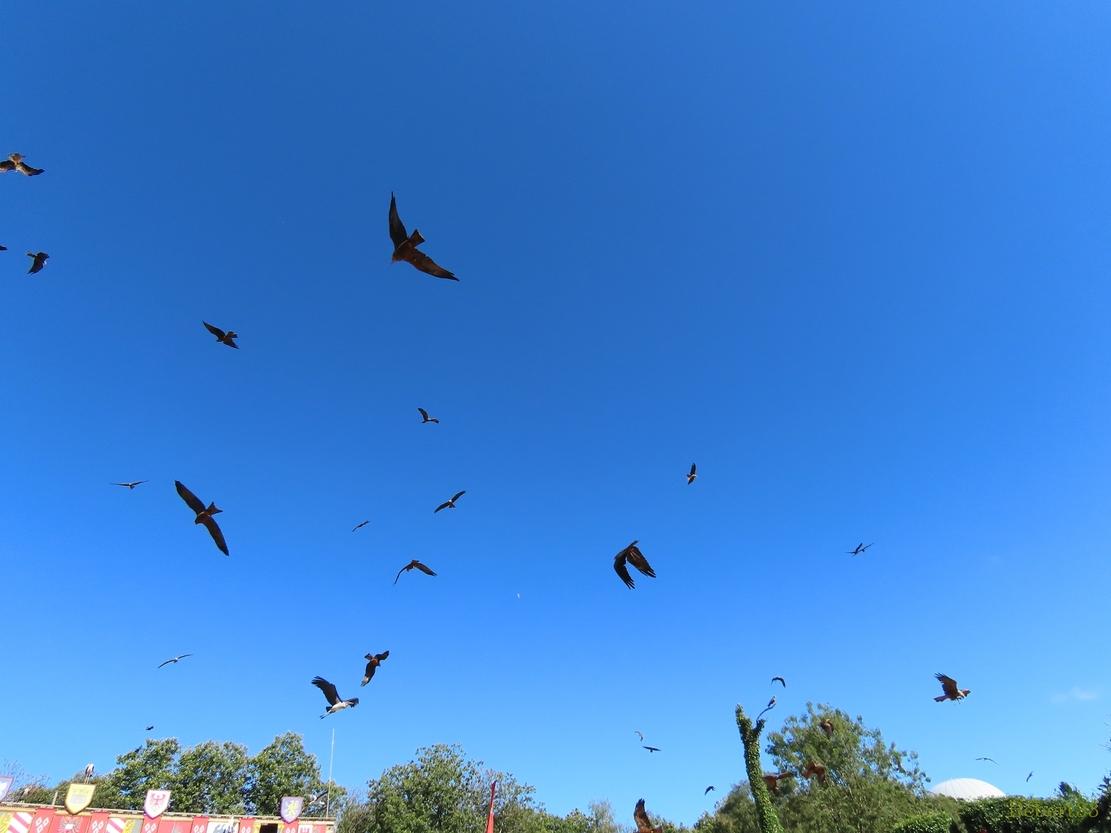 les oiseaux au Puy du Fou