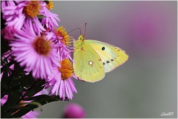 Papillons-2-3150-souci.jpg