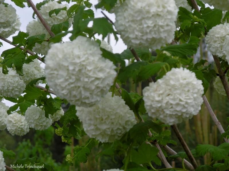 Une balade fleurie dans mon village, le 19 avril...