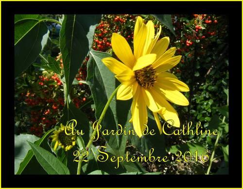 jardiner avec la lune du 1er au 10 Octobre