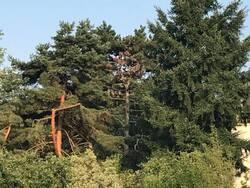 rayon de soleil sur un tronc d'arbre