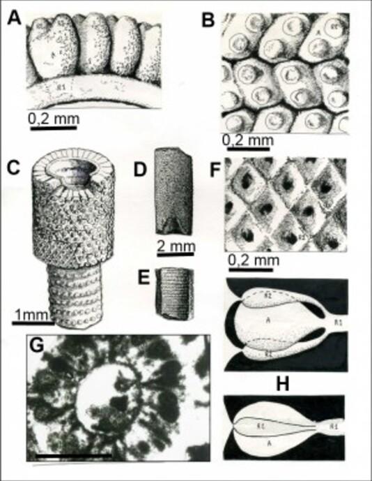 Image2-copie-2