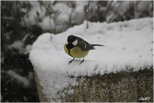 Oiseaux-3-3847-charbo.jpg