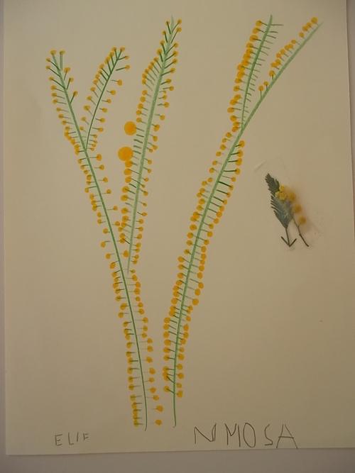 Nos bouquets de mimosas