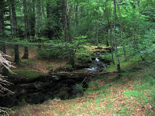 Chemin D'Arles 2008 - Boisseron (21km) - Castres