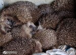 Les Animots Rigolos, associés à Hegalaldia, centre de sauvegarde de la faune sauvage