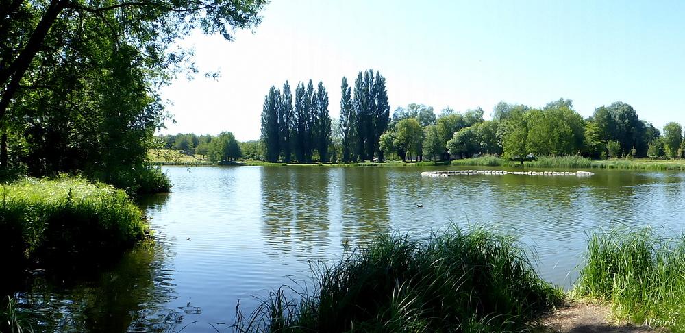 Le grand étang du parc
