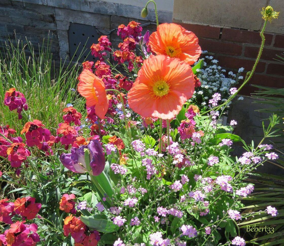 Fleurs en macros