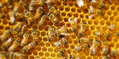 Le rayon de miel