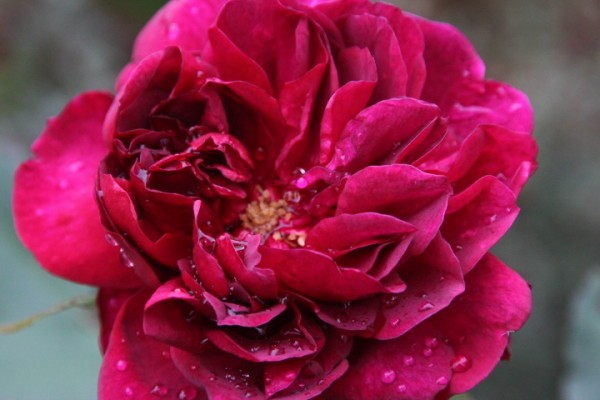 Darcey-Bussell 4614