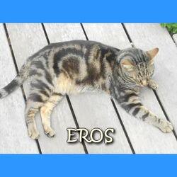 Chats perdus dans l'Hérault