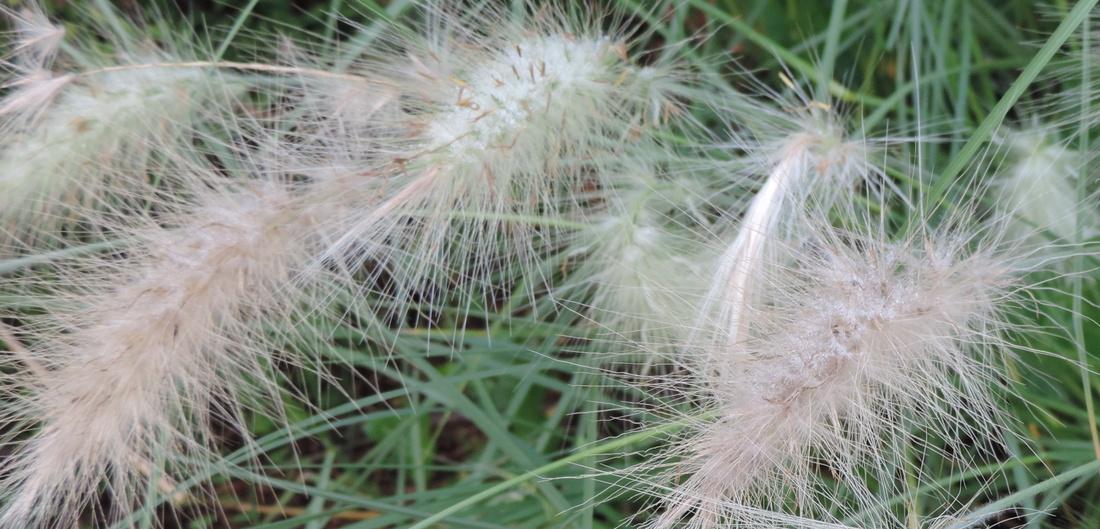 des belles plantes et recherche photo