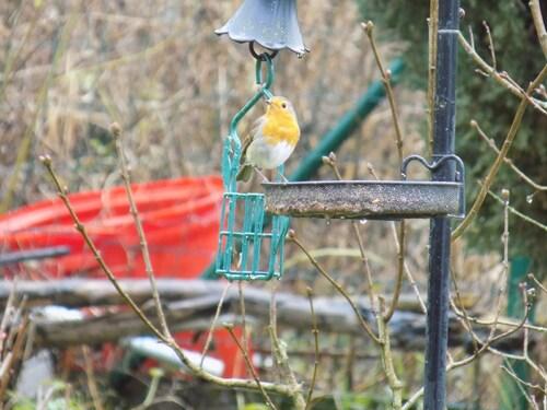 L'oiseau au plastron