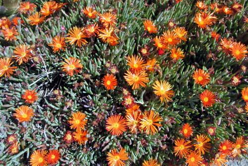 Jolies fleurs : couleur orange
