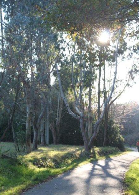 jardin à St Urbain 054