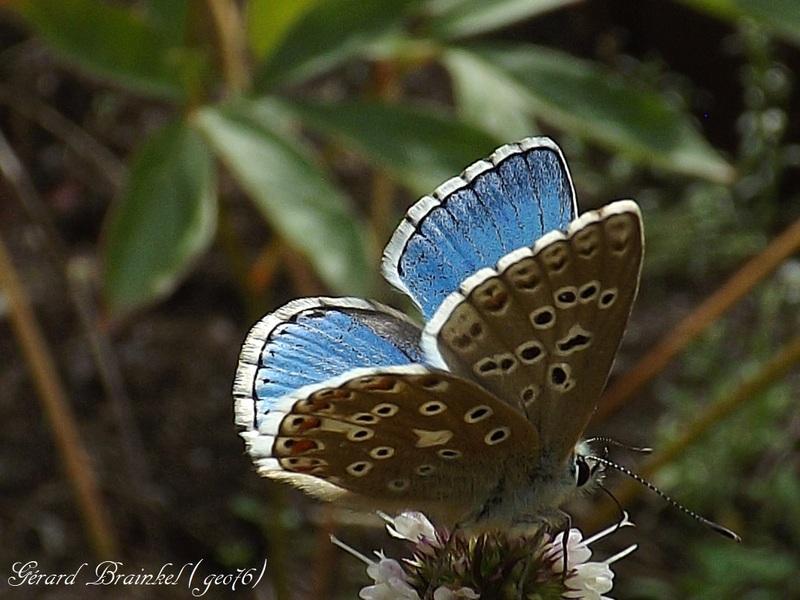Papillon bleu...!!