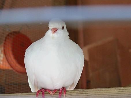 les-oiseaux-et-autres-volatiles-0114.JPG