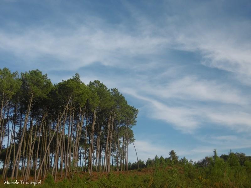 Une balade à l'Etang du Paludot à LEON (40), le 18 décembre...