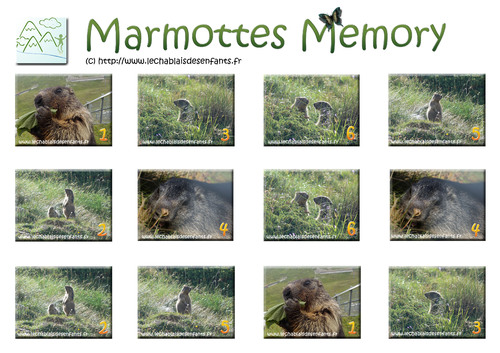 Marmottes memory
