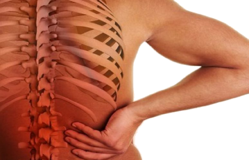 Le lien entre la colonne vertébrale et les organes