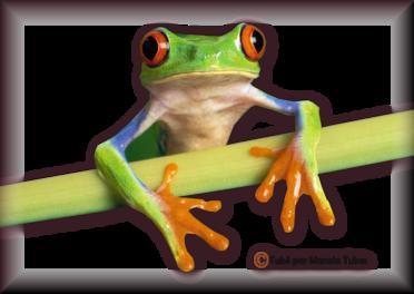 Tube grenouilles / Crapauds 2947