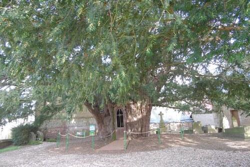 L'arbre de l'année 2015 en Haute-Normandie
