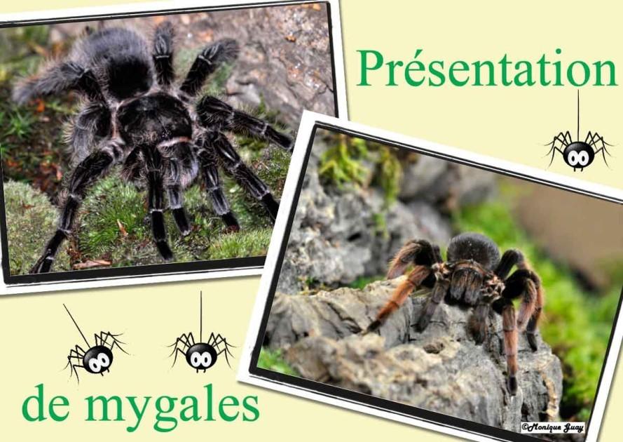 mygales-1