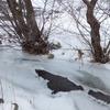 La Véronne gelée (Collandres)