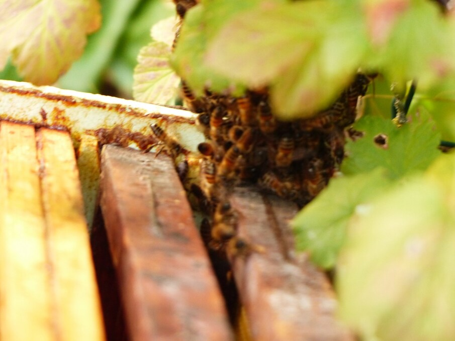 Les abeilles...