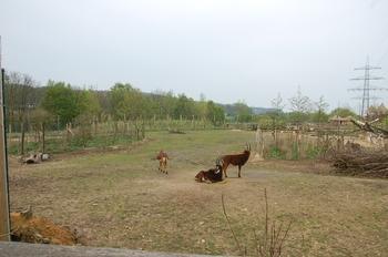 Zoo Osnabruck d50 2012 080