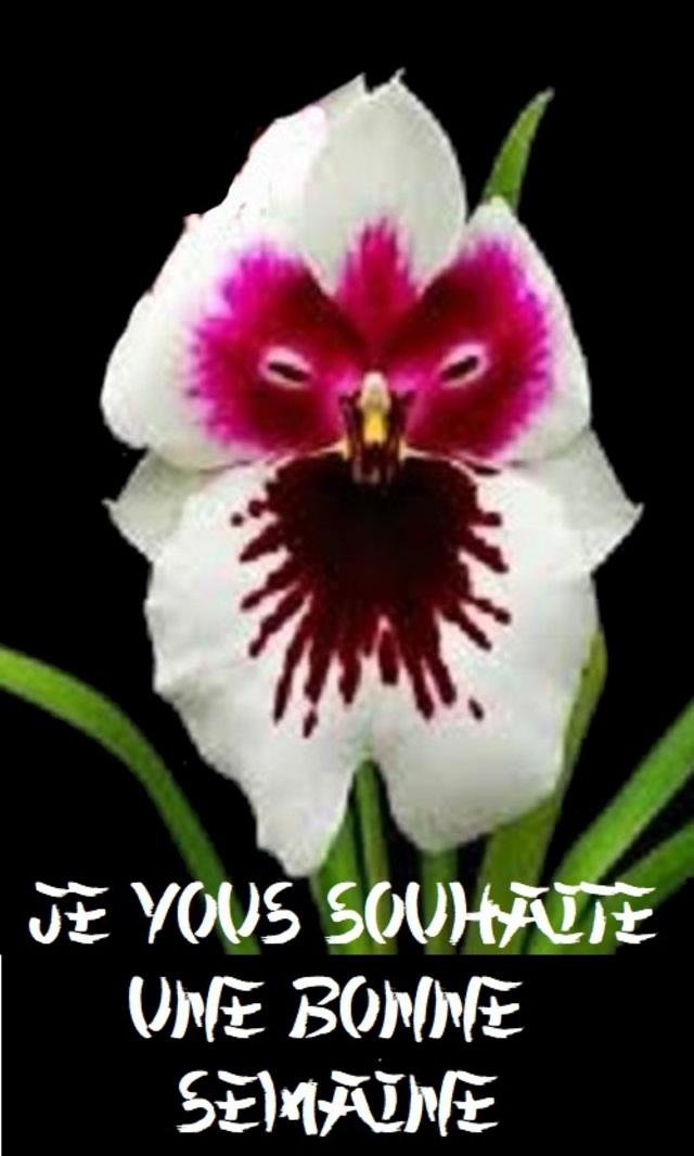L'Orchidée fascine les peuples depuis bien longtemps ….Mais moi aussi