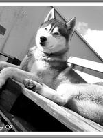 Max (1 an)