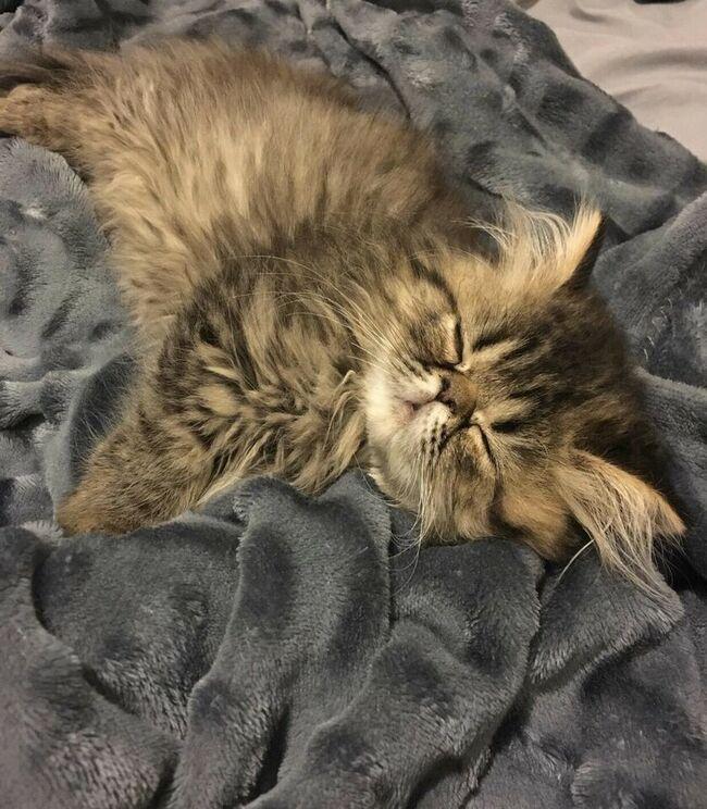 La petite chatte que je désire adopter