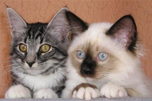 NanouPour les amoureux des chats , 2 , »