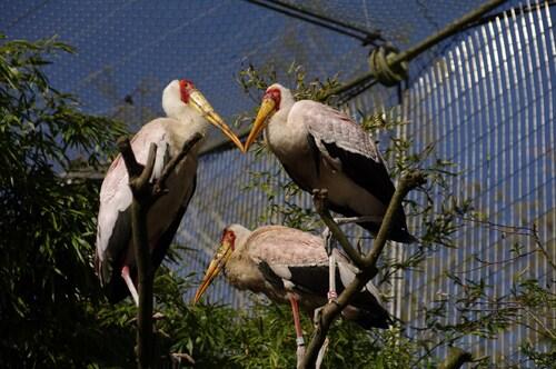 Une journée au parc des oiseaux