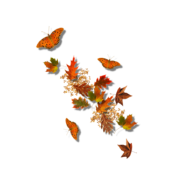 conte d'automne ...