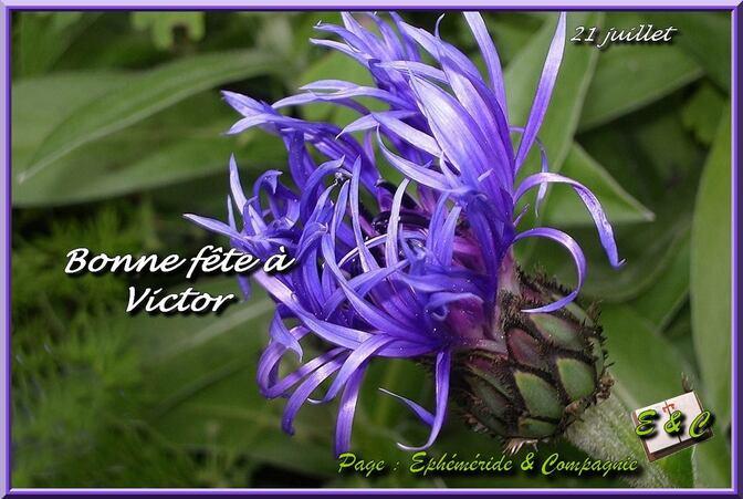 L'image contient peut-être: plante, fleur, texte et nature