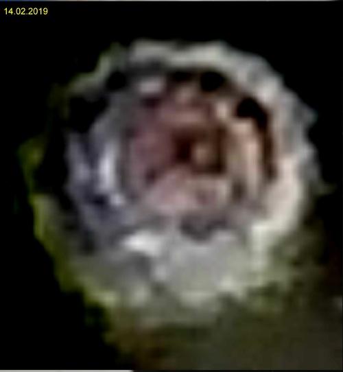 orbe 17-1272