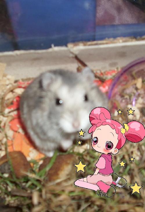 Doremi et mon Hamster Shoutie